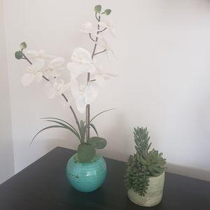 Orchid In Distressed Vase & Succulent
